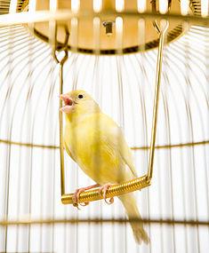 Аренда птиц