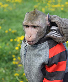 Съемка с обезьяной
