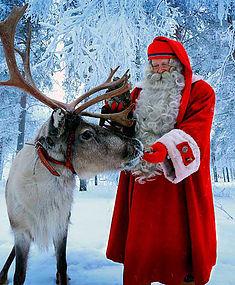 Северные олени на Новый год