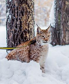 Фотосессия диких животных в Москве