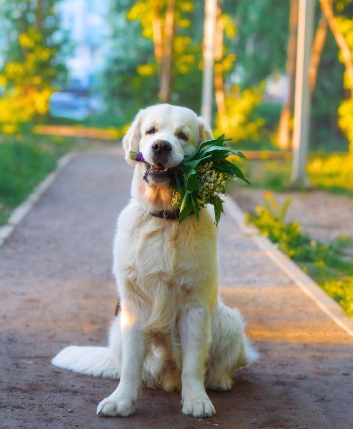Аренда собак