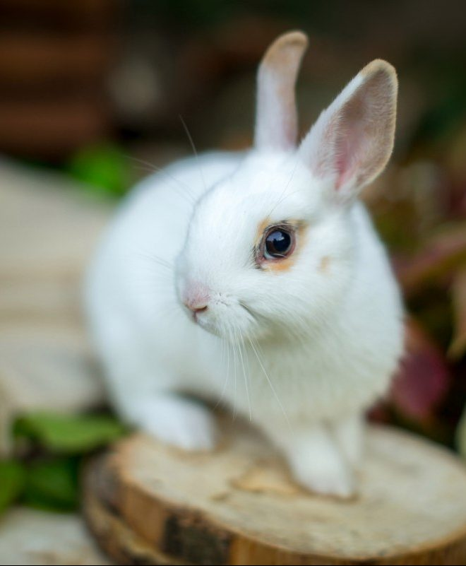 Аренда кроликов